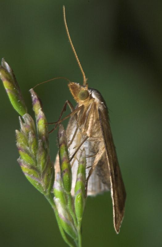 Lepidoptera-8284.jpg