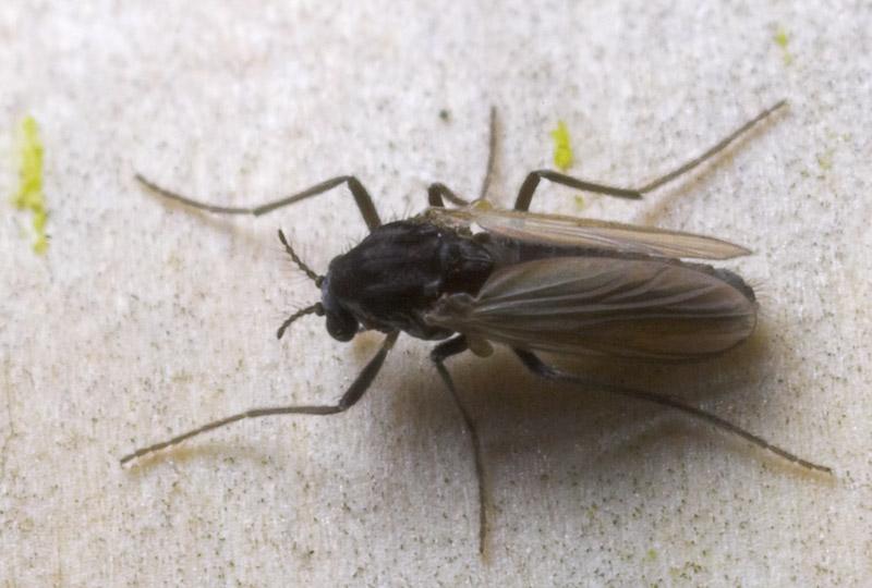 Diptera-8814.jpg
