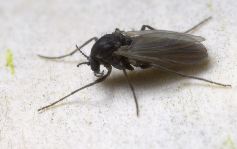 Diptera-8815.jpg