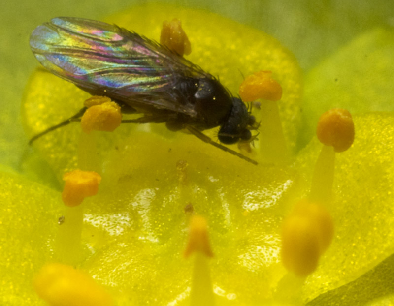 Diptera-8837.jpg