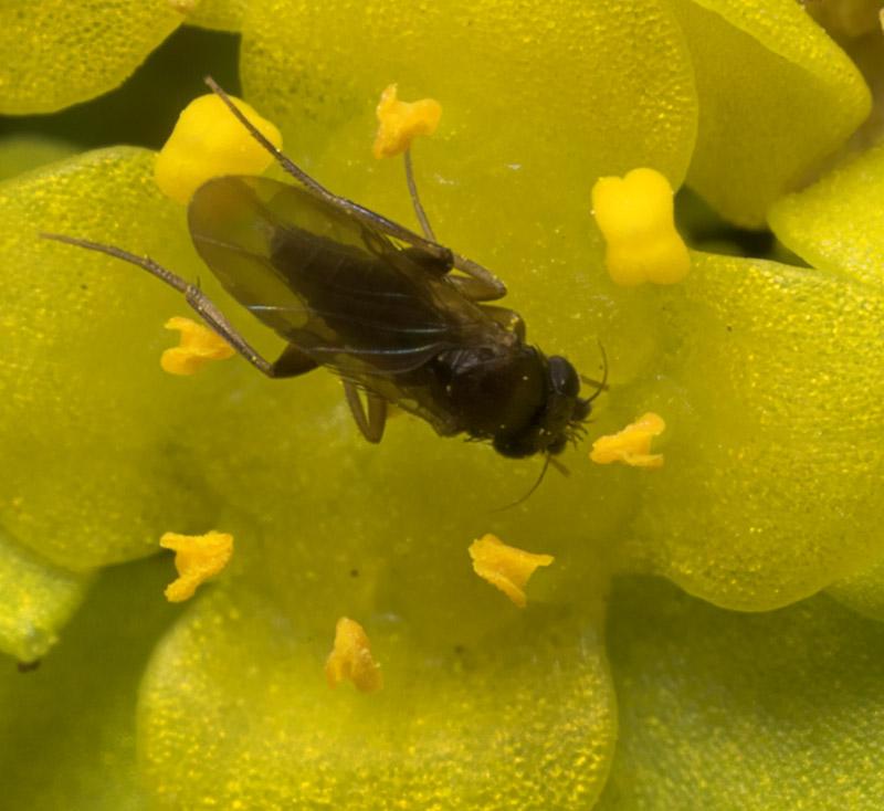 Diptera-8838.jpg