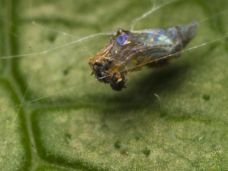 Araneae-1313.jpg