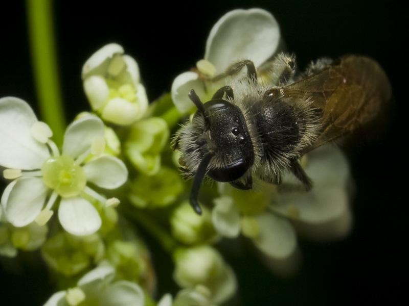 Apidae-1563.jpg